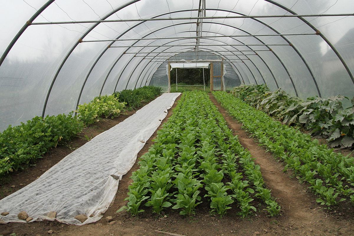 Agri-food in York Region